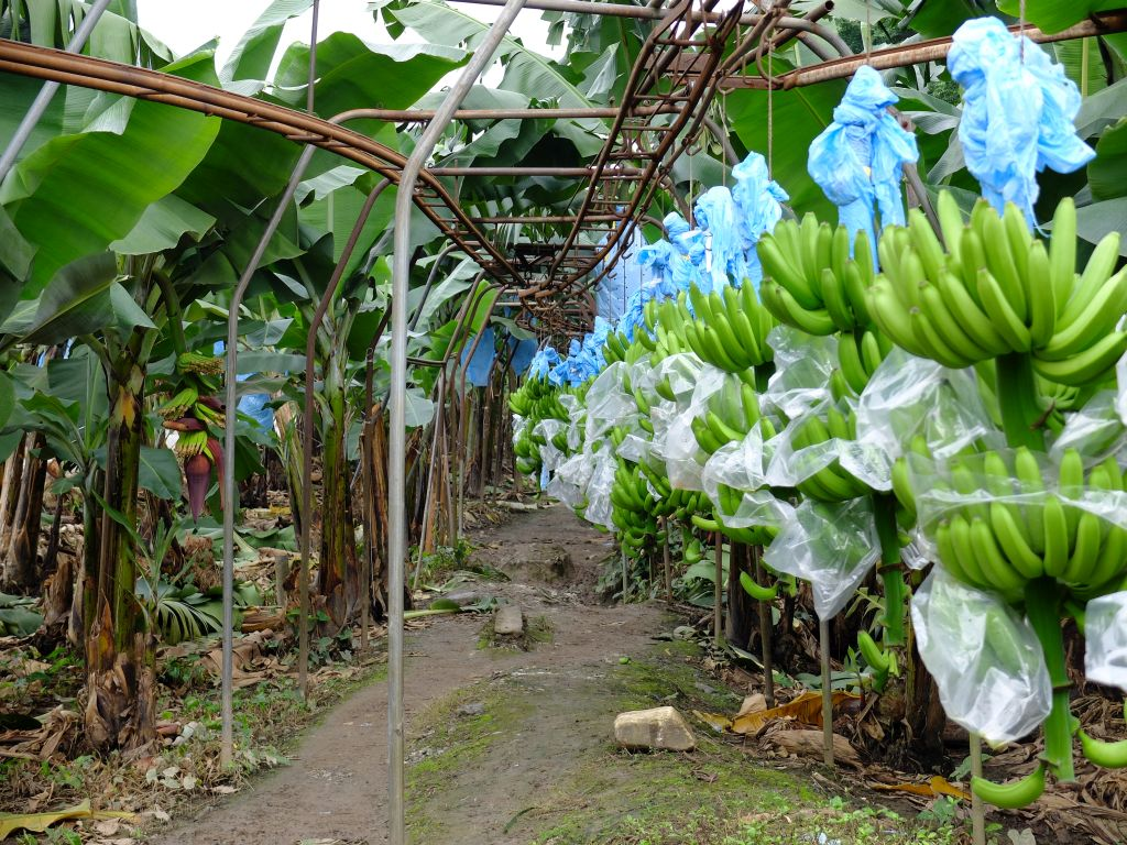 bananenbahn